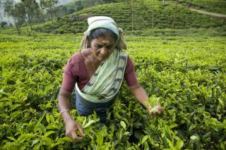Srí Lanka gyöngyszemei körutazás privát sofőrrel