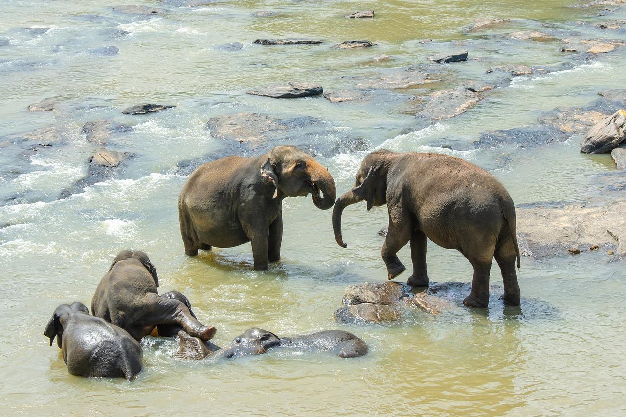 Srí Lanka körút + üdülés a Hotel J-ben