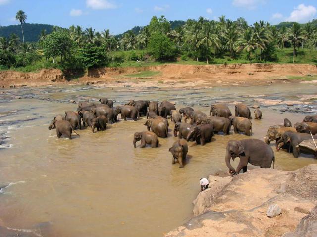 Srí Lanka körút + üdülés Royal Island szigetén