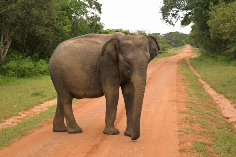 Srí Lanka körút+üdülés Holiday Island**** szigetén