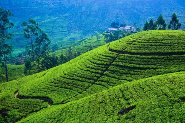 Szilveszteri körutazások Srí Lankán