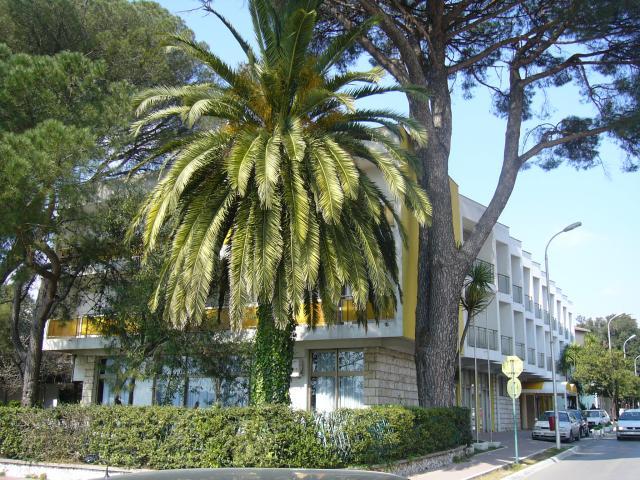 Hotel Mimoza  - Tivat