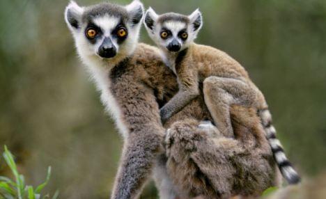 Kelet-madagaszkári körutazás mauritiusi pihenéssel