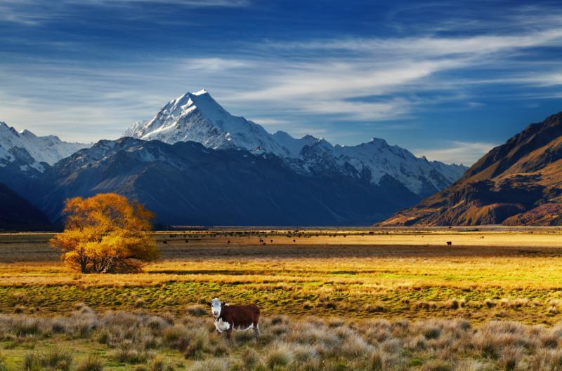 A nagyszerű Új-Zéland - Repülj és vezess