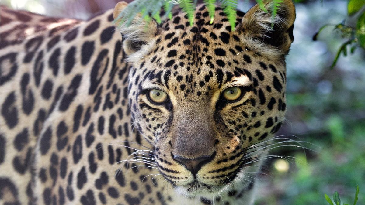 legjobb internetes társkereső oldal Dél-Afrikában